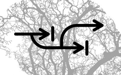 11- La plasticité cérébrale